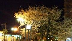 20110411_gotenyama.jpg